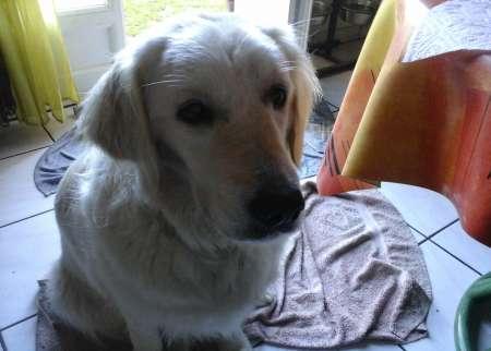 Photo ads/1459000/1459149/a1459149.jpg : CHERCHE UNE DOG SITTER , LE HAVRE ou alentours