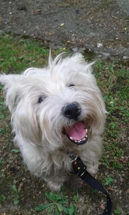 Photo ads/1572000/1572690/a1572690.jpg : A donner de toute urgence petit chien mal 15mois