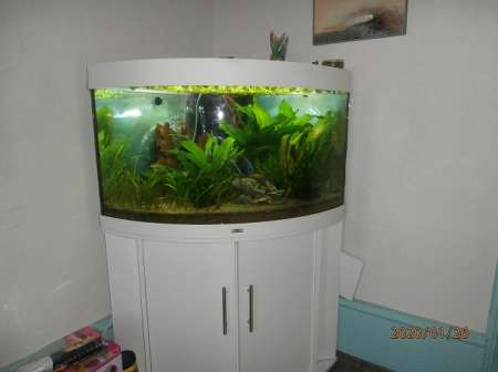 Photo ads/1598000/1598280/a1598280.jpg : vends aquarium d'angle